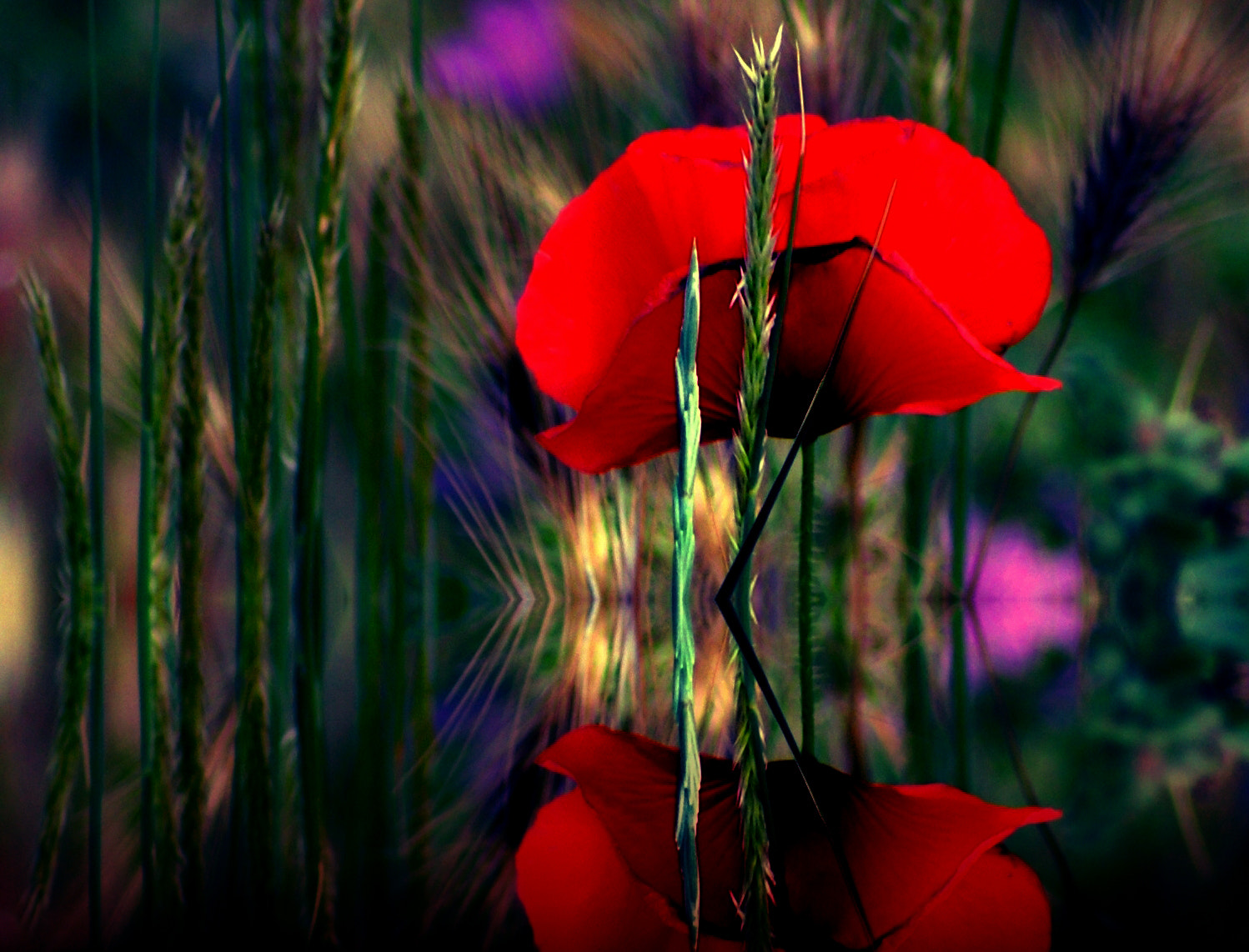 Photograph POPpy by Tom Magnum on 500px