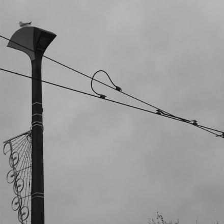 Un oiseau dans la, Panasonic DMC-FS3
