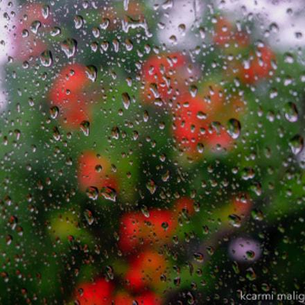 Umbrella season, Fujifilm X-A3