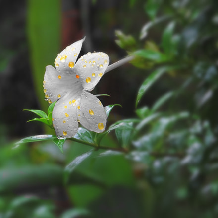 Flowering, Canon POWERSHOT SX150 IS