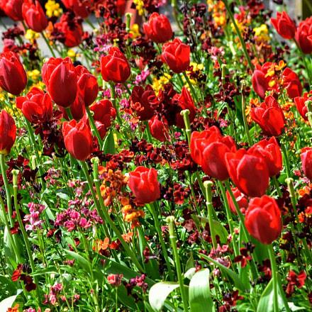 Flowers, Nikon D3400, AF-S DX VR Nikkor 55-300mm f/4.5-5.6G ED