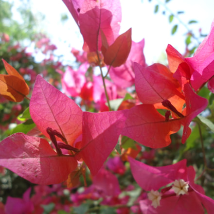 Red flowers, Sony DSC-W610