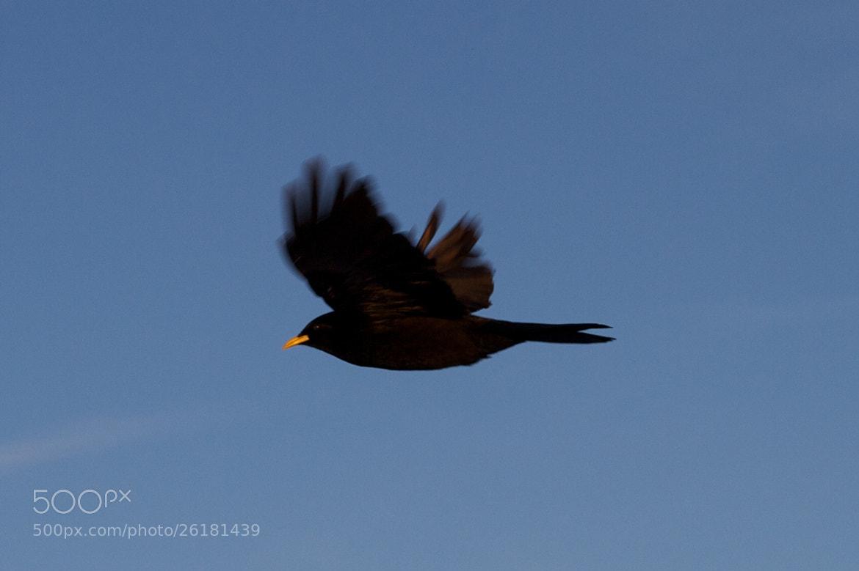 Photograph Un oiseau dans le vent by Julien Jasseny on 500px