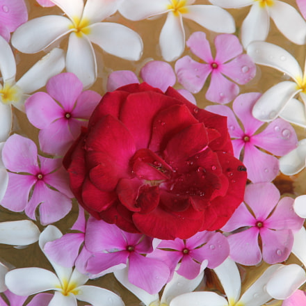 Flowers, Canon EOS 1100D