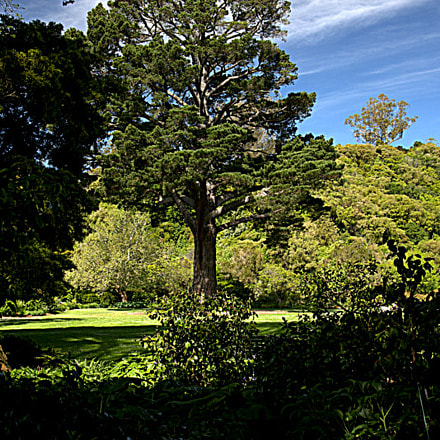 Botanic Gardens ( NZ ), Canon EOS 5D MARK III, Canon EF 24-105mm f/4L IS