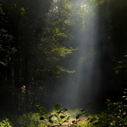 Lightfall, Canon POWERSHOT SX510 HS