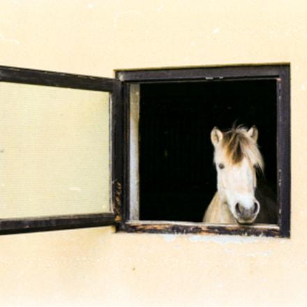 Horse looking through window, Nikon FE