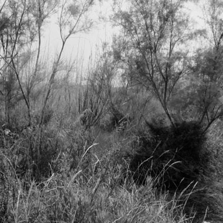 EL MUNTANY zona protegida, Fujifilm XQ2
