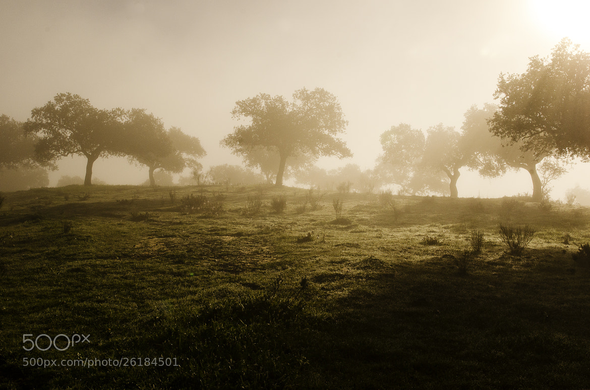 Photograph Foggy Day by jesus mancera on 500px