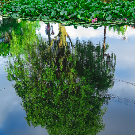 Reflection, Canon POWERSHOT G16