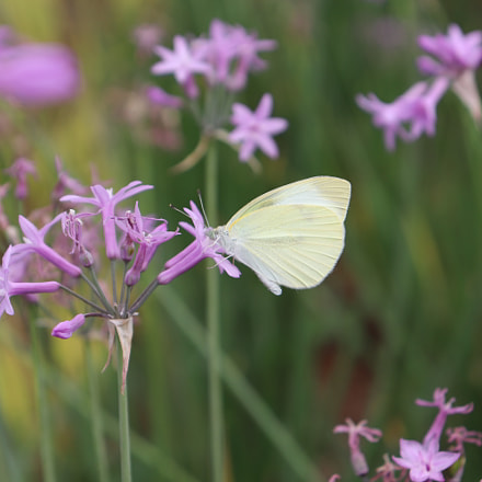 flower and butterfly, Canon EOS 200D, Canon EF-S18-55mm f/4-5.6 IS STM