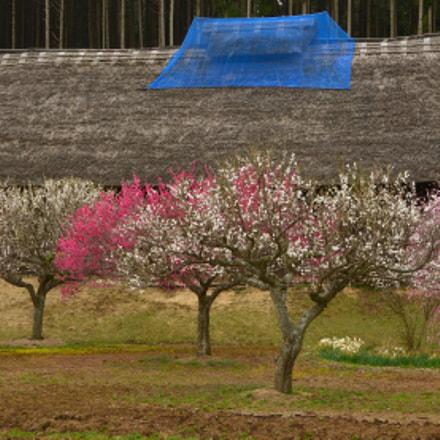 A spring, Nikon D300S, AF-S DX VR Zoom-Nikkor 18-200mm f/3.5-5.6G IF-ED [II]