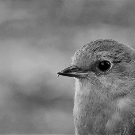 Bird's eye, Panasonic DMC-TZ70