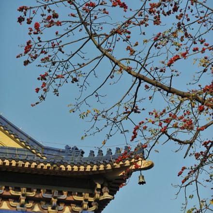 Kapok in Sun Yat-sen, Nikon D700, AF-S VR Zoom-Nikkor 70-200mm f/2.8G IF-ED