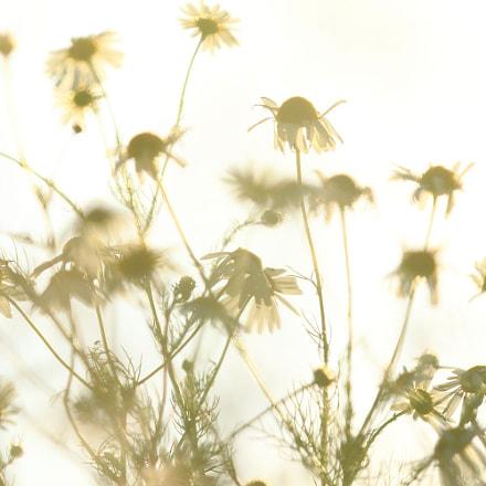 summer breeze - no. 1, Canon EOS 70D, Canon EF 70-200mm f/2.8L IS II USM