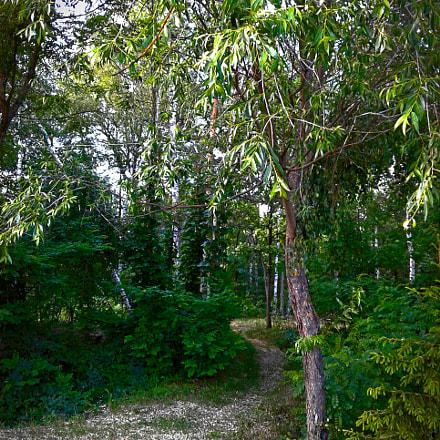 Forest path, Samsung Galaxy J1