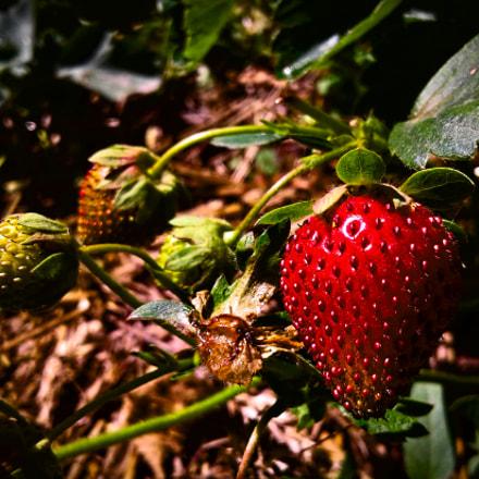 Strawberry fields forever, Samsung Galaxy J1