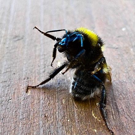 Johny Bee Good, Samsung Galaxy J1