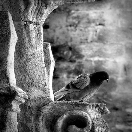 Pigeon lurking, Canon POWERSHOT G9 X