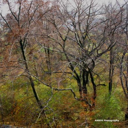 Autumn trees, Canon POWERSHOT G9