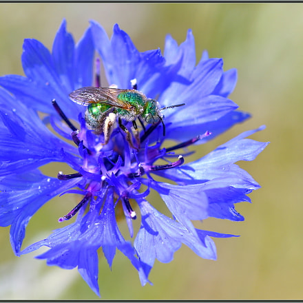 Green on Blue, Nikon D850