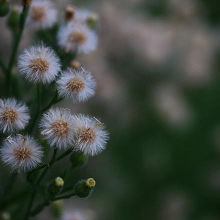 Random Close-up, Canon EOS 70D, Canon EF-S 60mm f/2.8 Macro USM