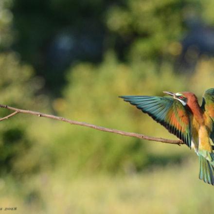 aterrizajes 4, Nikon D7100