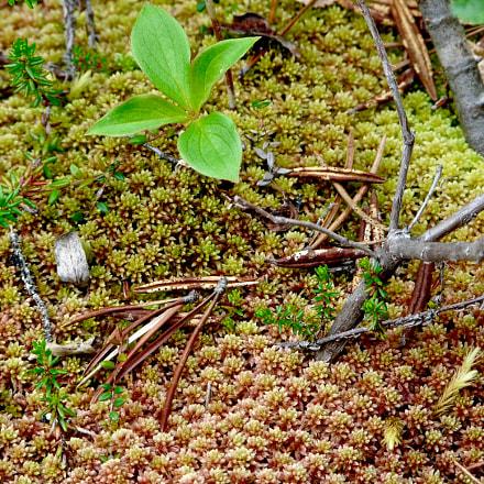 Tiny Groundcover Plants, Panasonic DMC-FZ18
