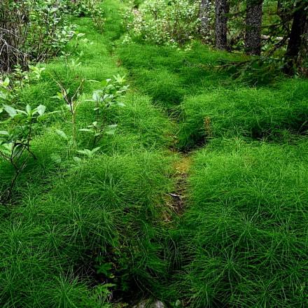 Overgrown Trail, Panasonic DMC-FZ18