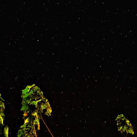 Constellation, Sony DSC-QX100