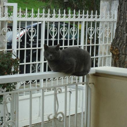 Grey Cat, Sony DSC-W320