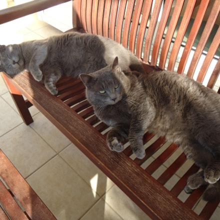 Grey cats, Sony DSC-W320
