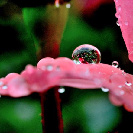 raindrop 0612, Nikon D7100, AF-S Micro Nikkor 60mm f/2.8G ED