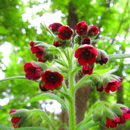 Little Red Flowers, Canon POWERSHOT SX610 HS