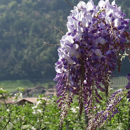 Blumenwelt im Südtirol, Sony DSC-HX200V