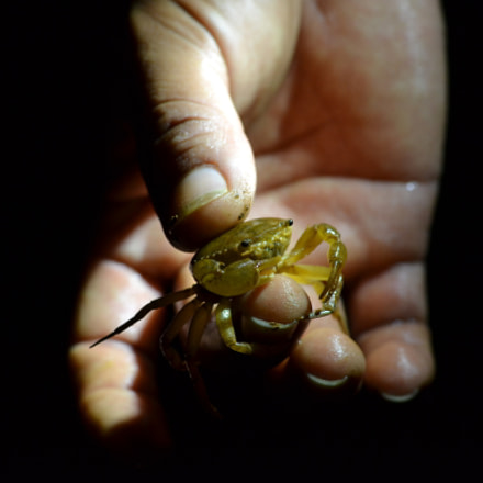 A crab in the, Nikon D3100, AF-S Nikkor 50mm f/1.8G