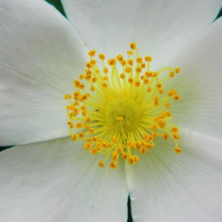 flower, Nikon COOLPIX L120