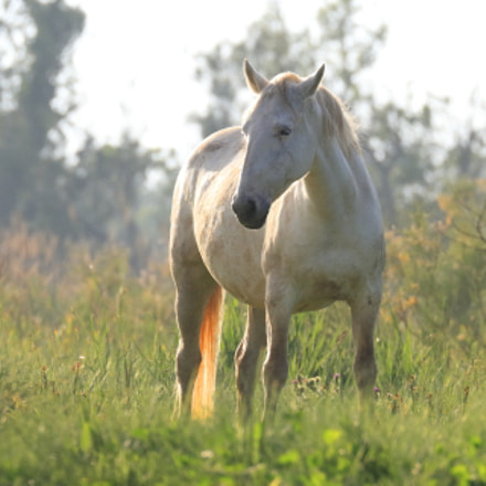 Horse in the wetlands, Canon EOS 7D, Canon EF 100-400mm f/4.5-5.6L IS II USM