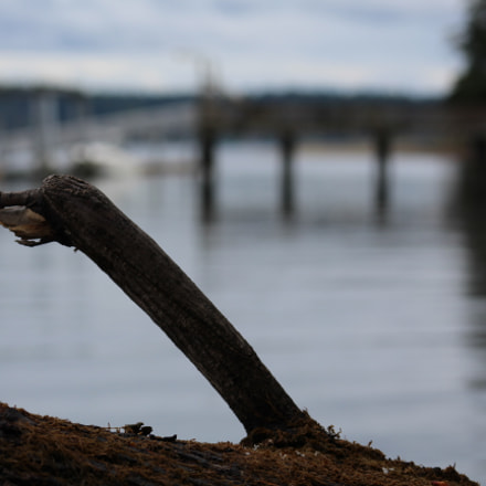 Lonely Logs, Canon EOS REBEL T6, Canon EF 75-300mm f/4-5.6