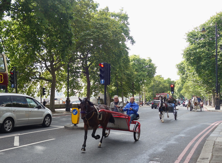 Horses in London by Sandra  on 500px.com