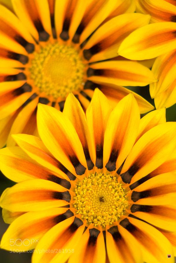 Photograph sunny sunny sunny by Igor Mazulev on 500px