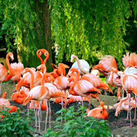 Zoo de Beauval 1, Nikon D5100, AF-S DX VR Zoom-Nikkor 55-200mm f/4-5.6G IF-ED