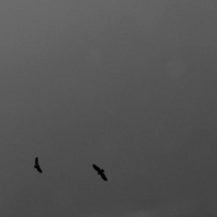 eagles, Panasonic DMC-FZ28