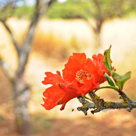 Countryside landscape, Nikon D5000, AF-S DX VR Zoom-Nikkor 18-55mm f/3.5-5.6G