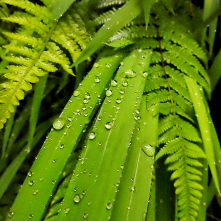 Drops of water, Sony DSC-S5000