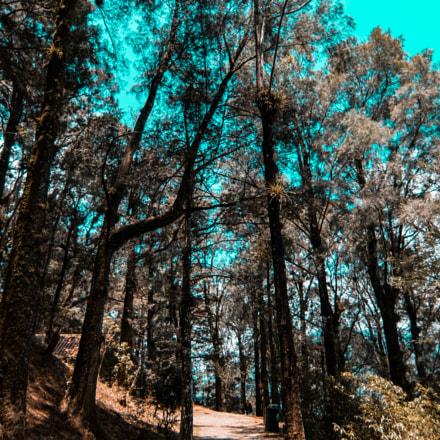 Walk trough the forest, Fujifilm XQ2