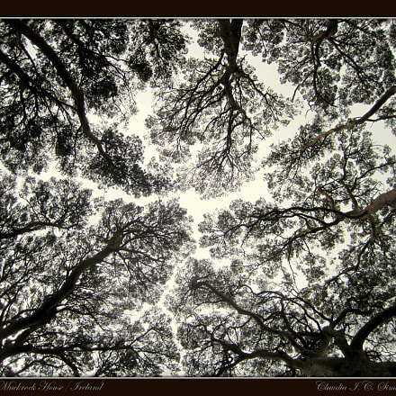 Landscape of Trees, Canon DIGITAL IXUS 95 IS