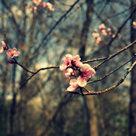 blooming, Canon EOS 5D MARK II, Canon EF 40mm f/2.8 STM