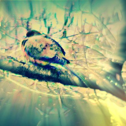 Fat dove, Nikon D300, Manual Lens No CPU