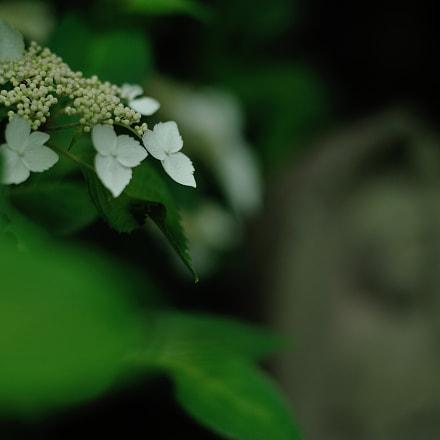 natural white, Nikon D700, Voigtlander Nokton 58mm F1.4 SLII